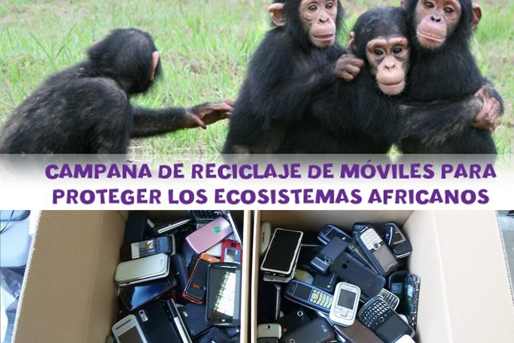 Mobilitza't per la selva